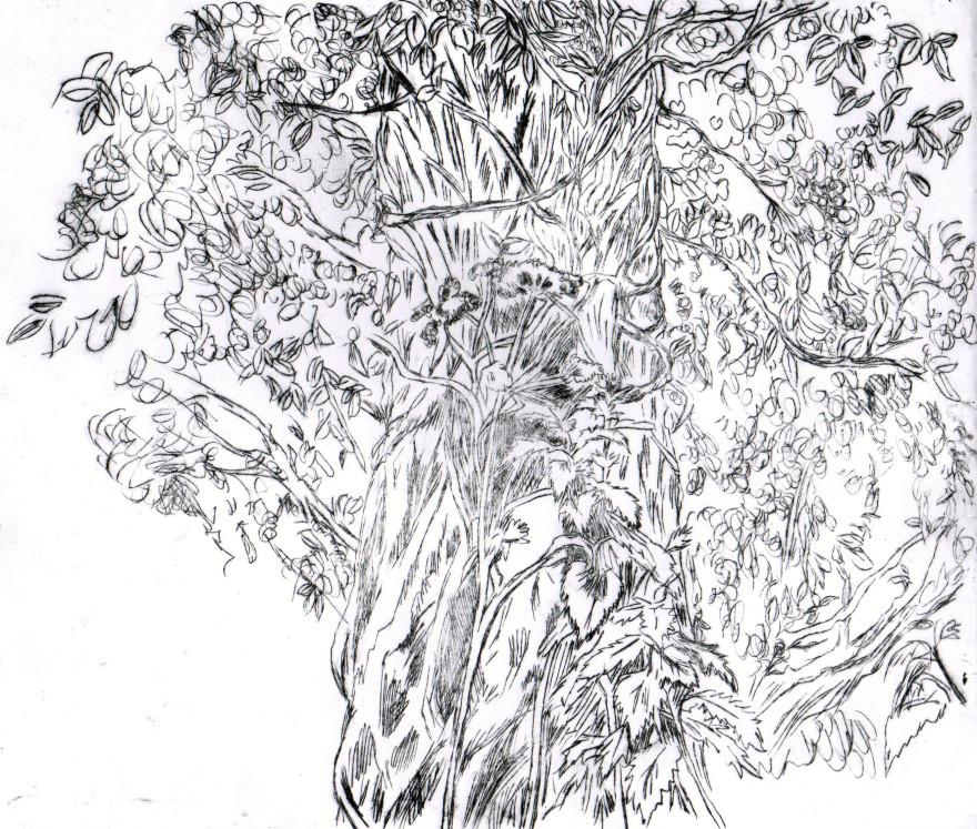 Drypoint tree bw